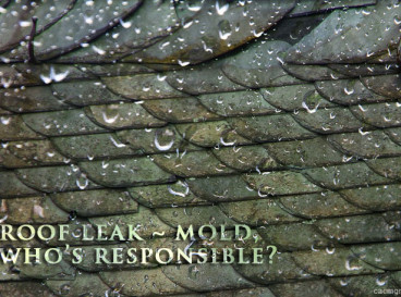 HOA community: Roof Leak and mold, Who's responsible?