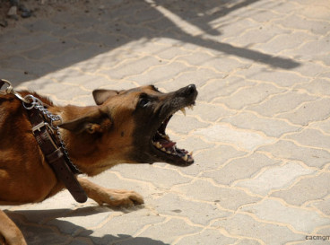 Aggressive Assistance Dogs in the HOA Community